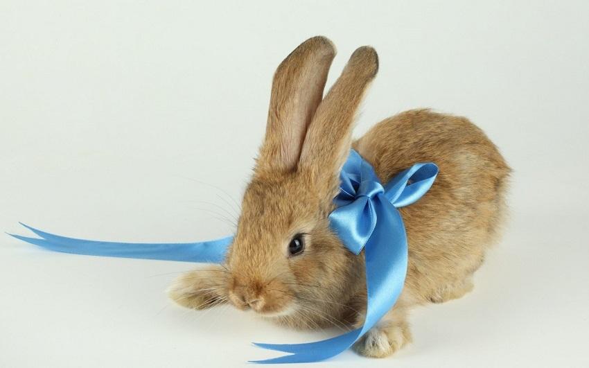 Regalar un conejo como mascota