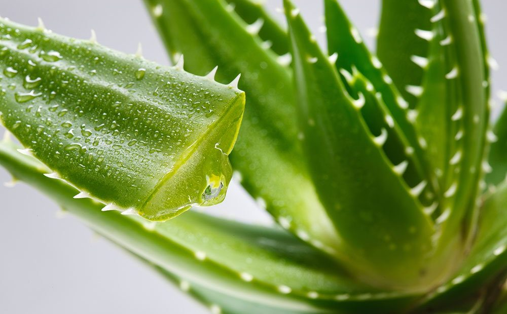 Ideas para regalar productos de Aloe Vera